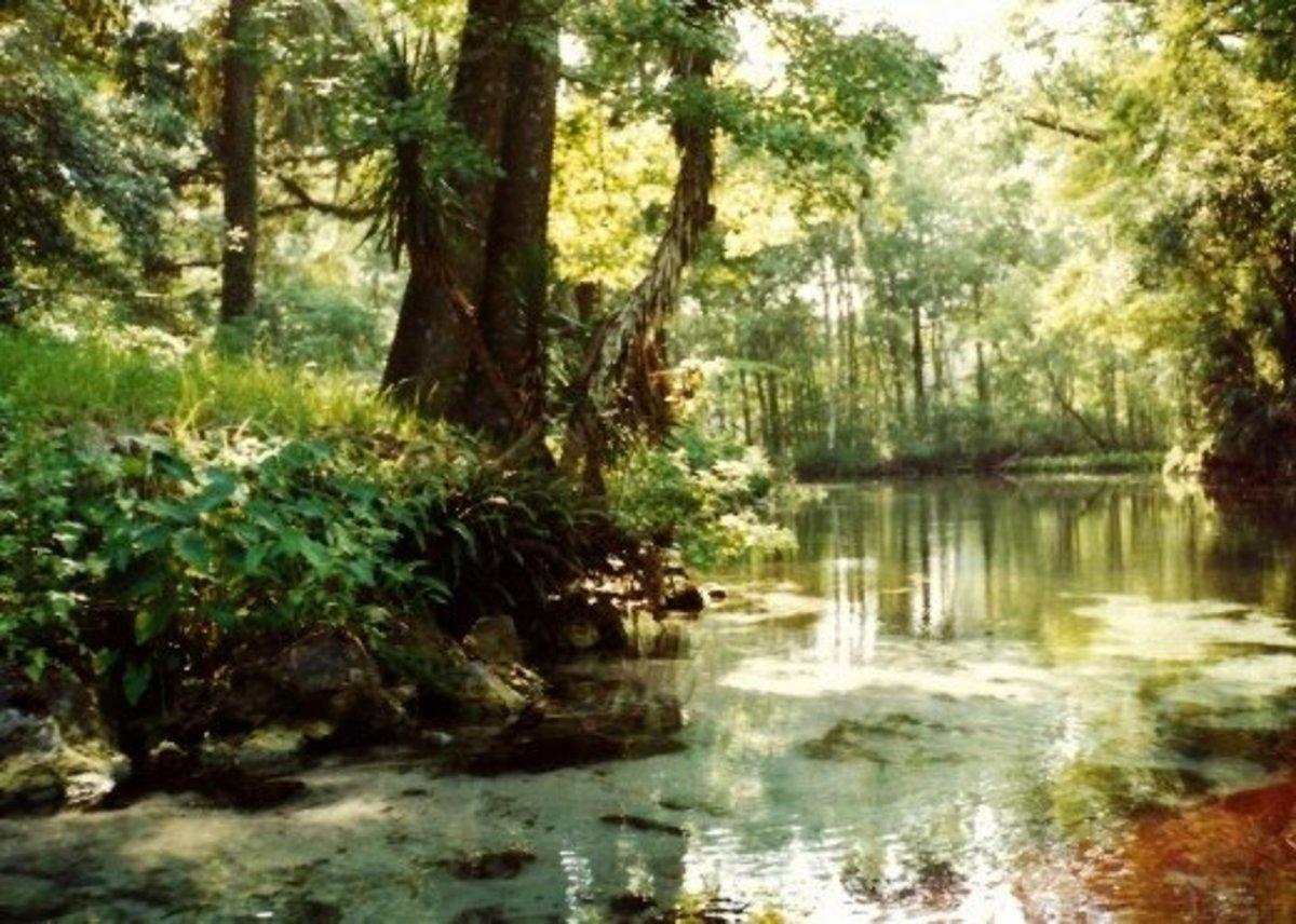 Beautiful Silver Springs in Florida