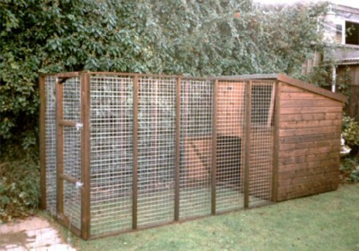 Choosing the Right Size Dog Kennel and Run?