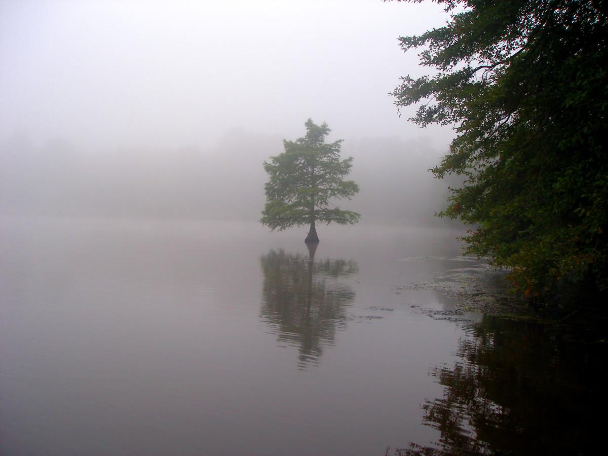 Lake Blackshear, GA: Where to Fish