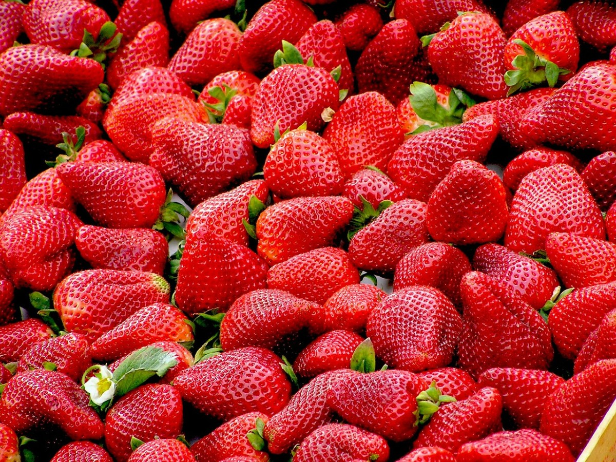 Interested in growing strawberries at home. How do you like this business idea 57