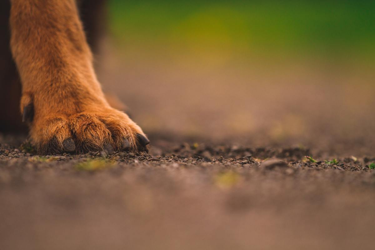 Nearly all dogs are born with front dewclaws, however rear dewclaws are rarer