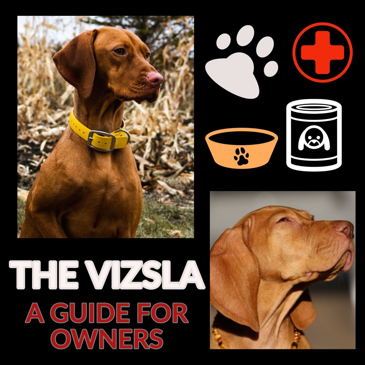 The Vizsla: A Guide for Owners