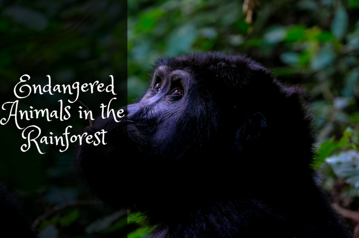 Destruction of our environment is the biggest contribution that we make to the extinction of many species in the forest.