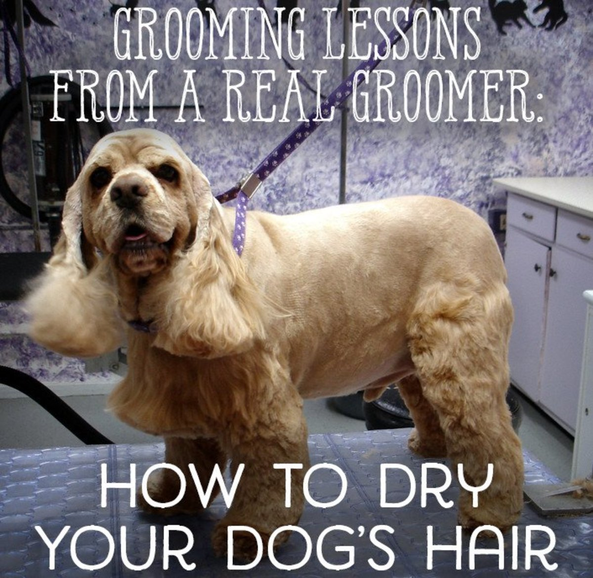 How to dry your dog's hair