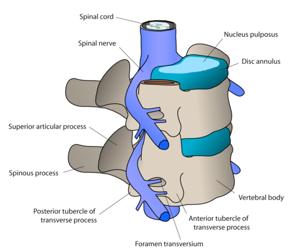 cervical-spine-surgery1