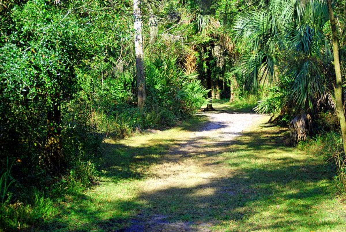 One of the Nature Trails near the Thousand Trails campground in Wauchula Florida