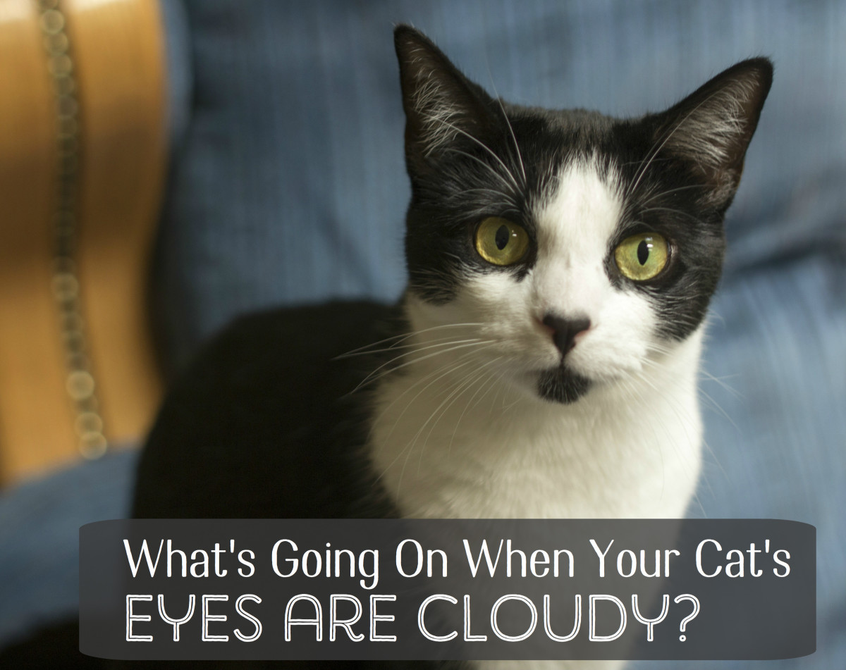 What Causes Cloudy Eyes in Cats?