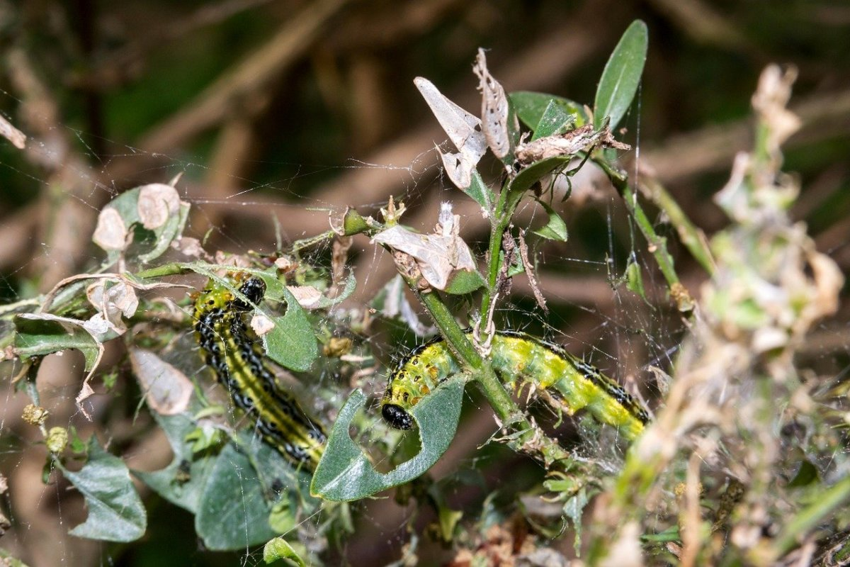 Here's What's Eating Your Garden: 12 Common Leaf-Eating Garden Pests