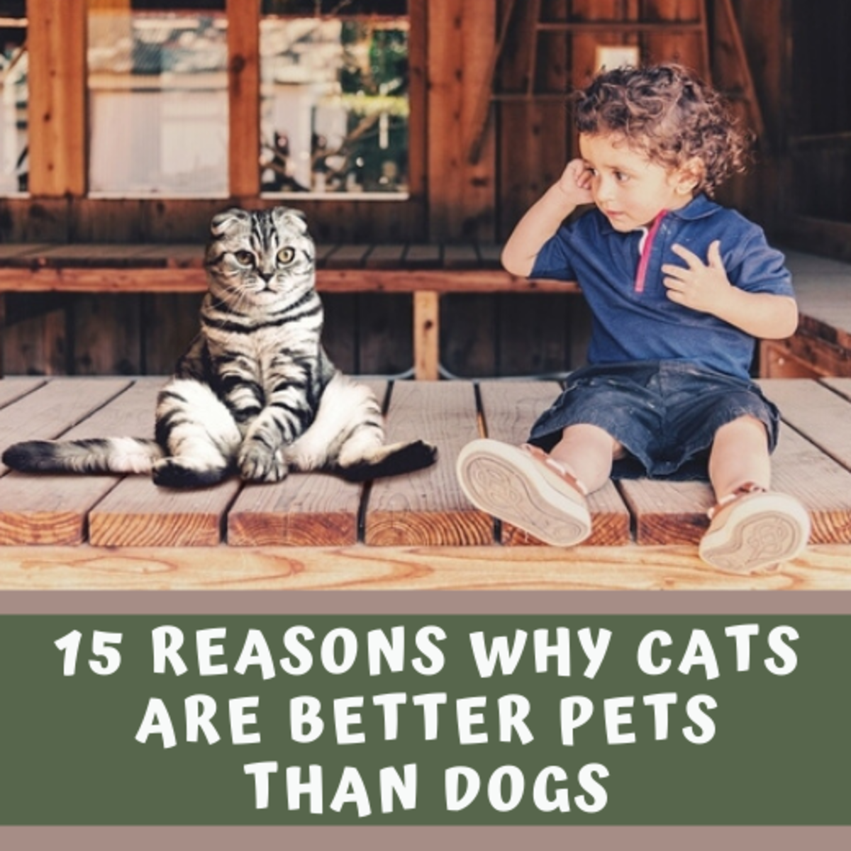 15 Reasons Why Cats Are Better Pets Than dogs.
