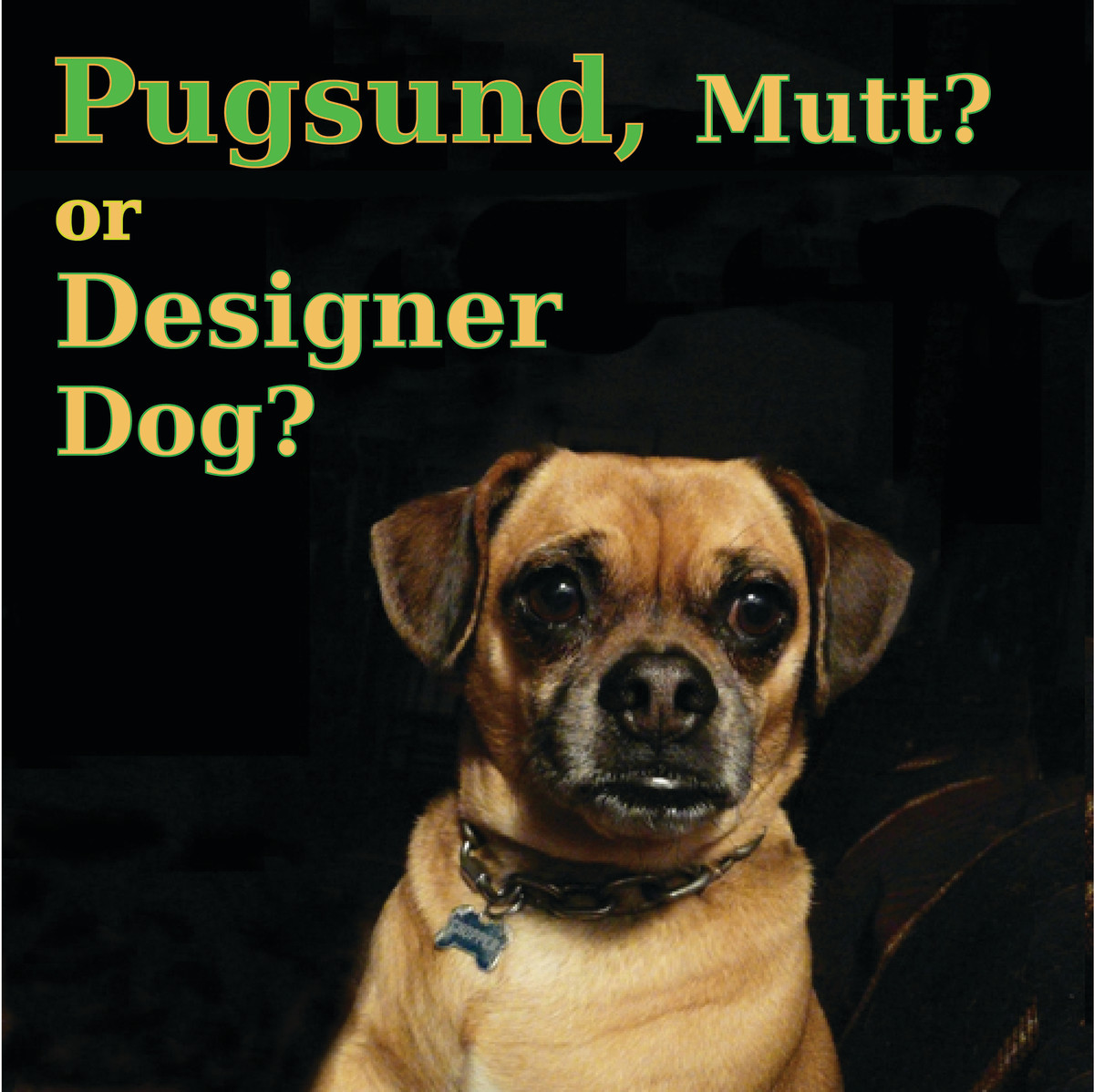 Pugsund - Mutt or Designer Dog?