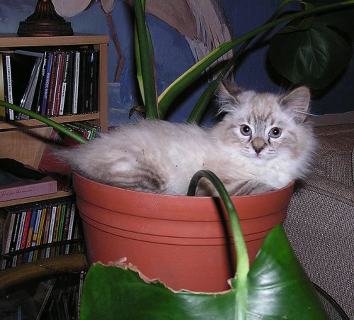 A-Z of Houseplants that are Poisonous to your Cats.