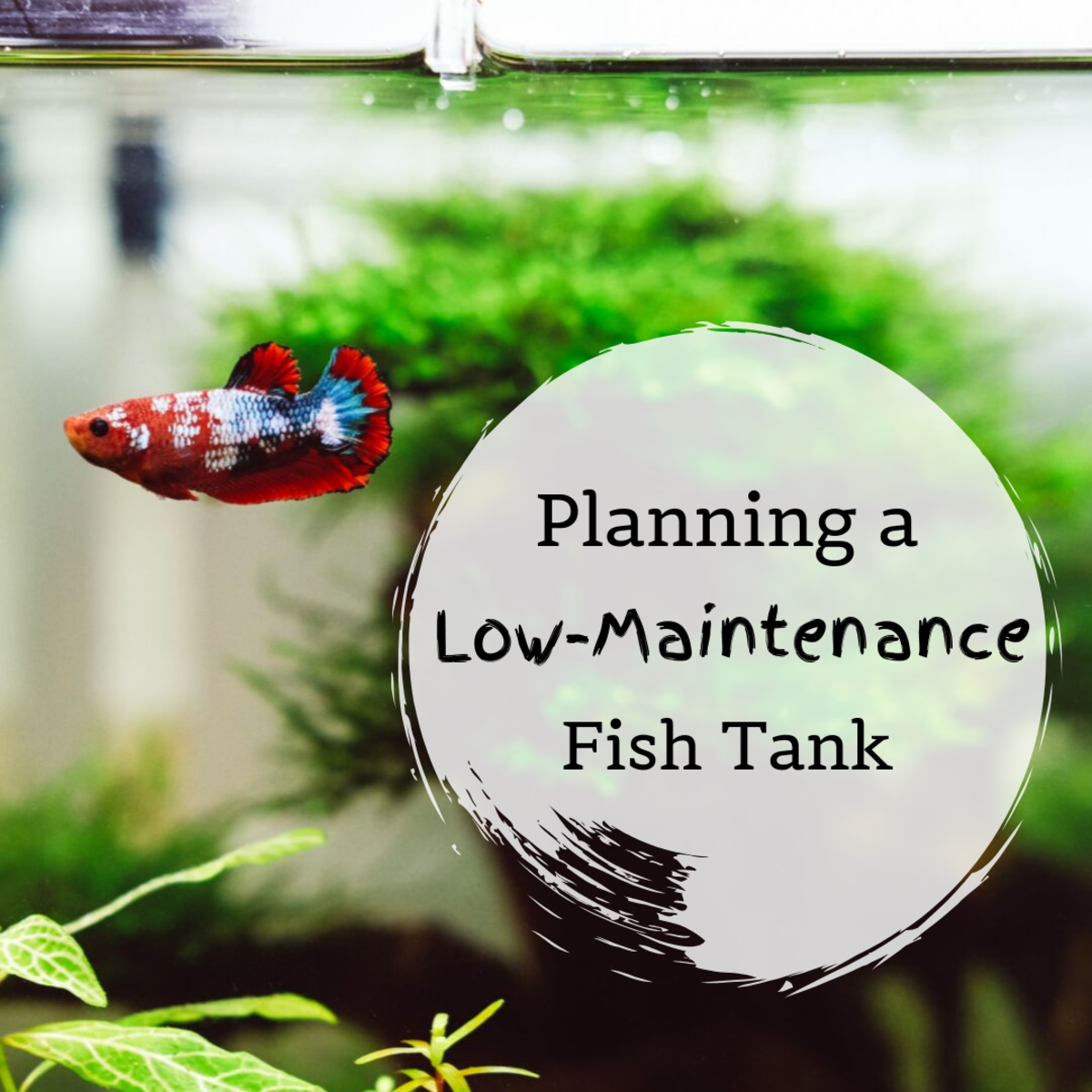 Tips for a Low-Maintenance Fish Tank