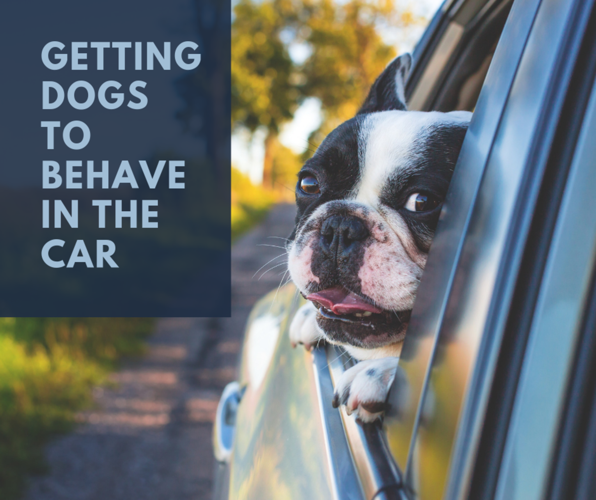 How to Get Dogs to Behave in the Car