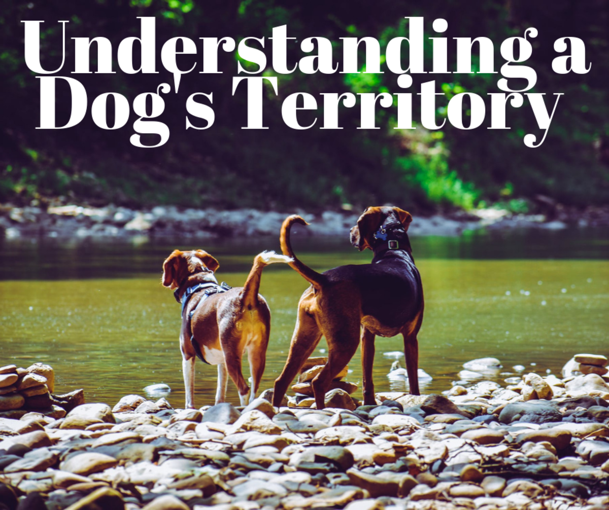 Read on to learn how and why dogs defend their territories.