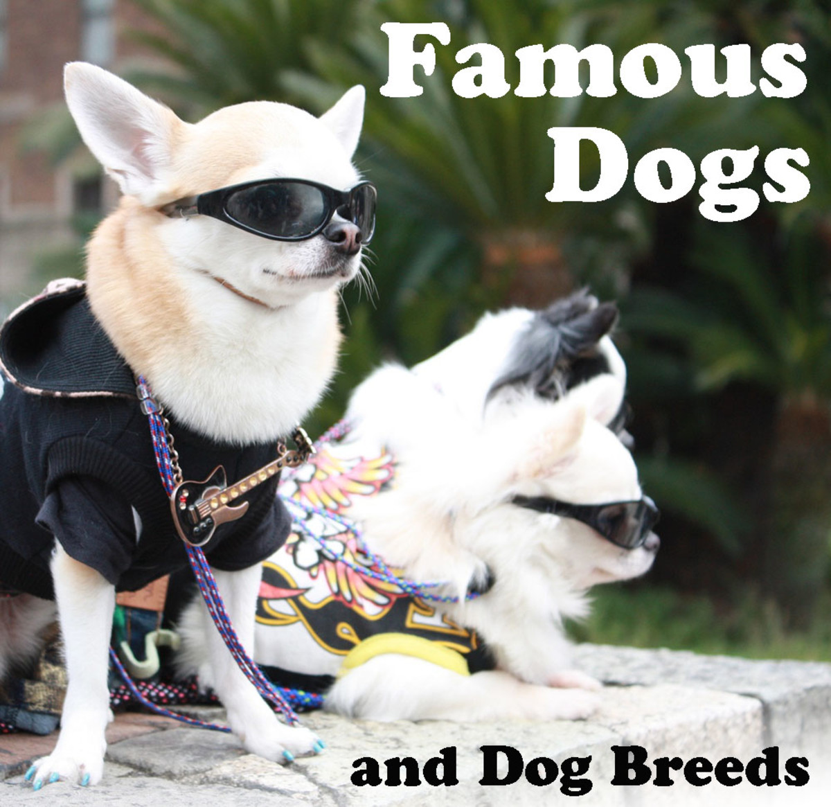 Famous Dogs and Dog Breeds That We All Know and Love