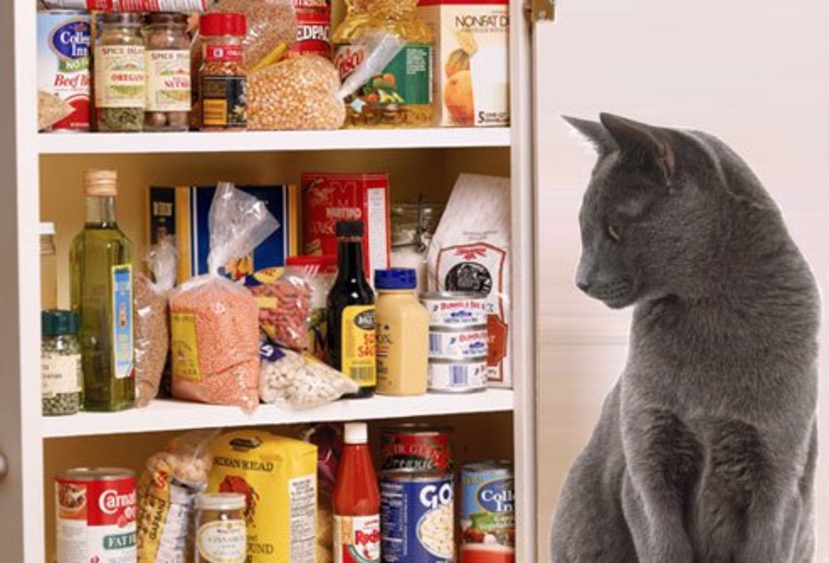 Be careful not to leave open food in exposed cabinets—who know's who'll get in there.