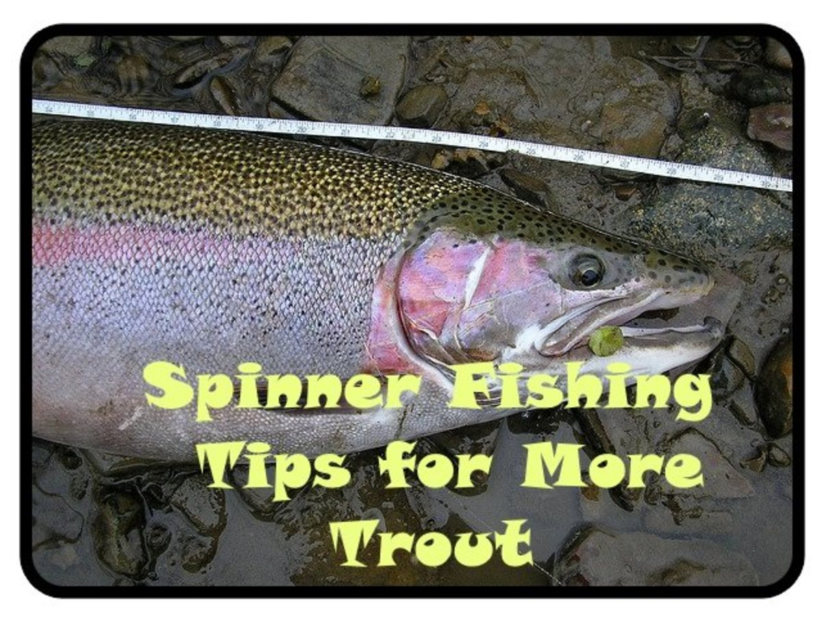 Spinner Fishing for Trout— Try These Tips for More Fish