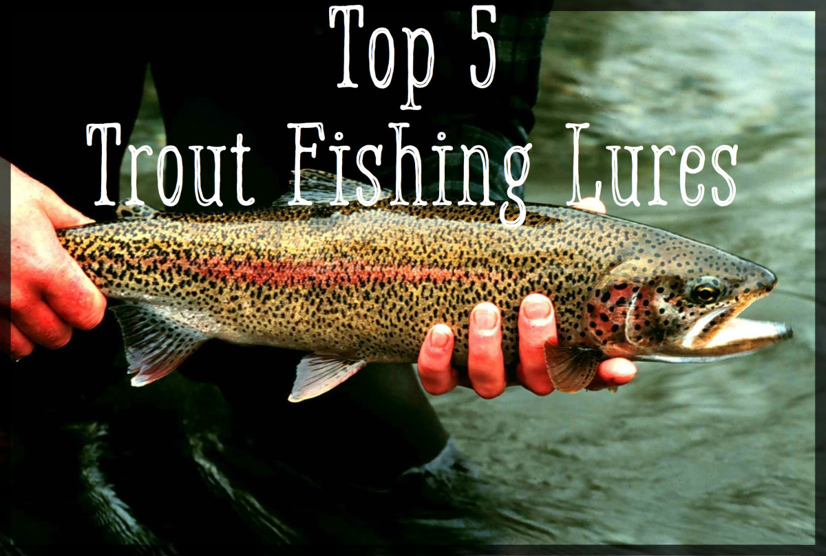 top 5 best trout lures skyaboveus