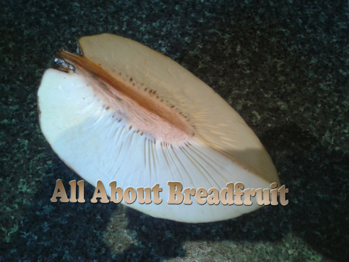 This is what a slice of breadfruit looks like