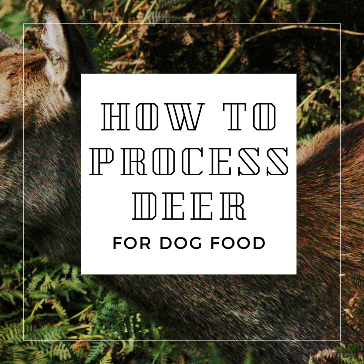 How to Skin a Deer for Raw Dog Food: An Illustrated Guide