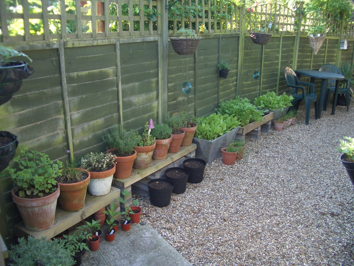 Vegetables and herbs in pots and containers