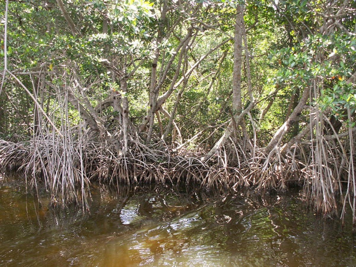 Skunk Ape sightings in Florida have led some researchers to conclude Bigfoot is loose in the swamps.