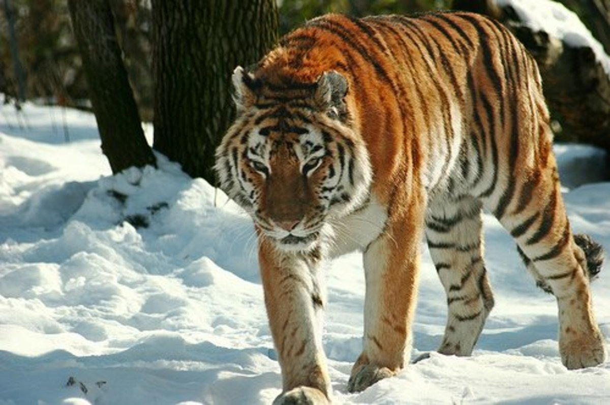 World's Top 10 Endangered Animals Species List