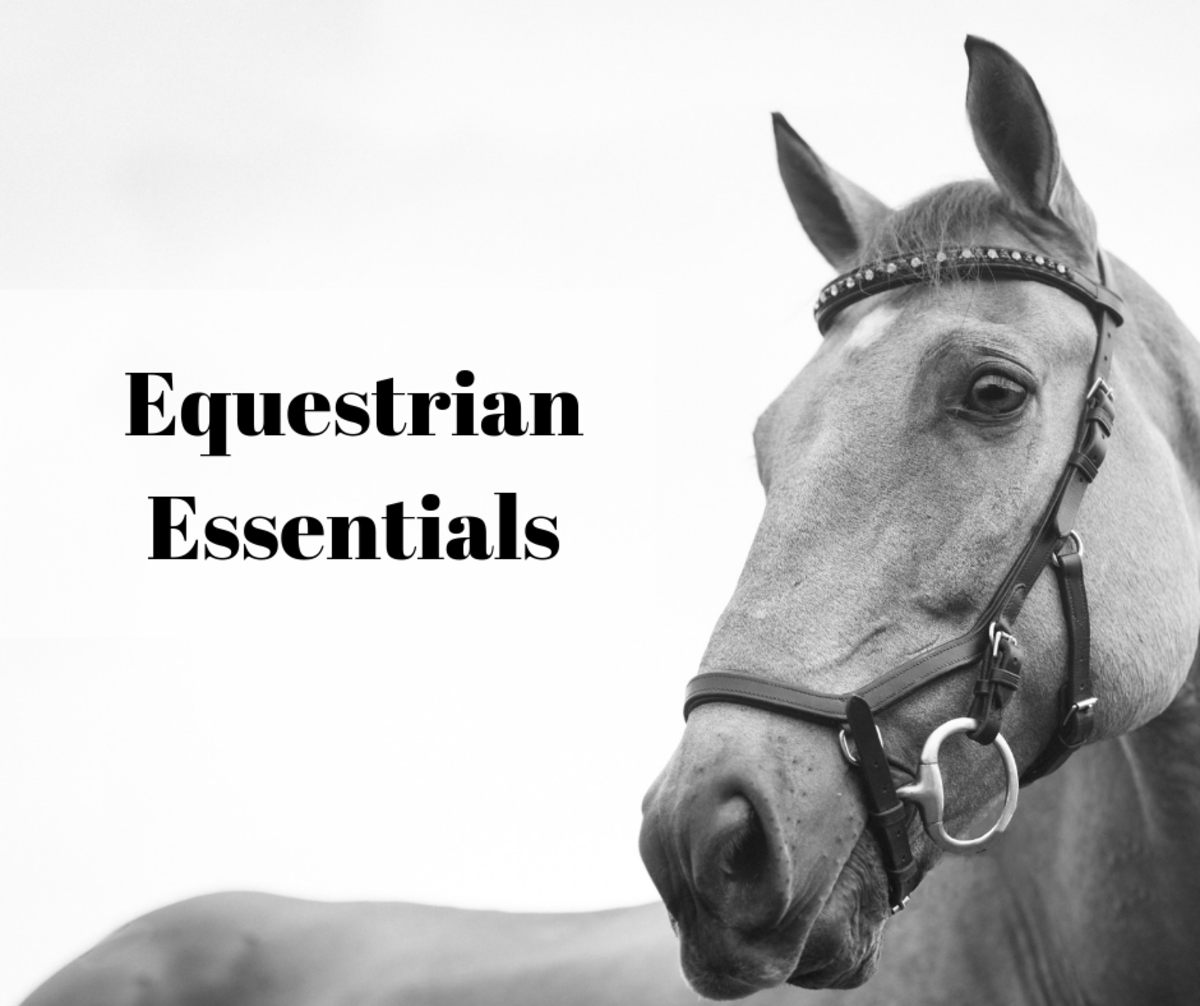 Equestrian Essentials: Horse Riding Equipment and Horse Clothing