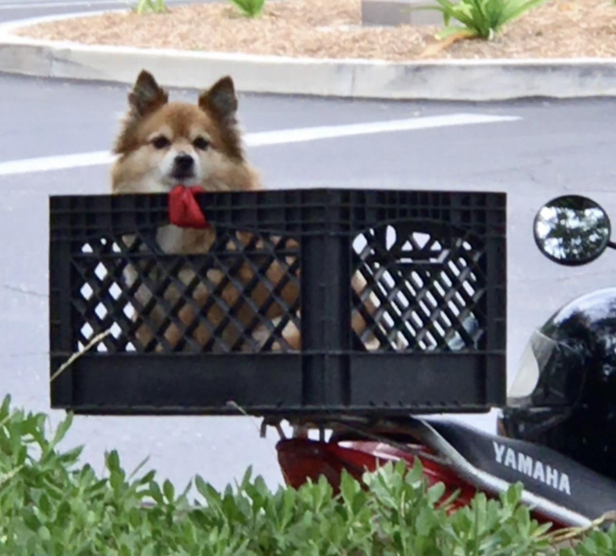 Canine Humor: The Dog in a Basket Poem