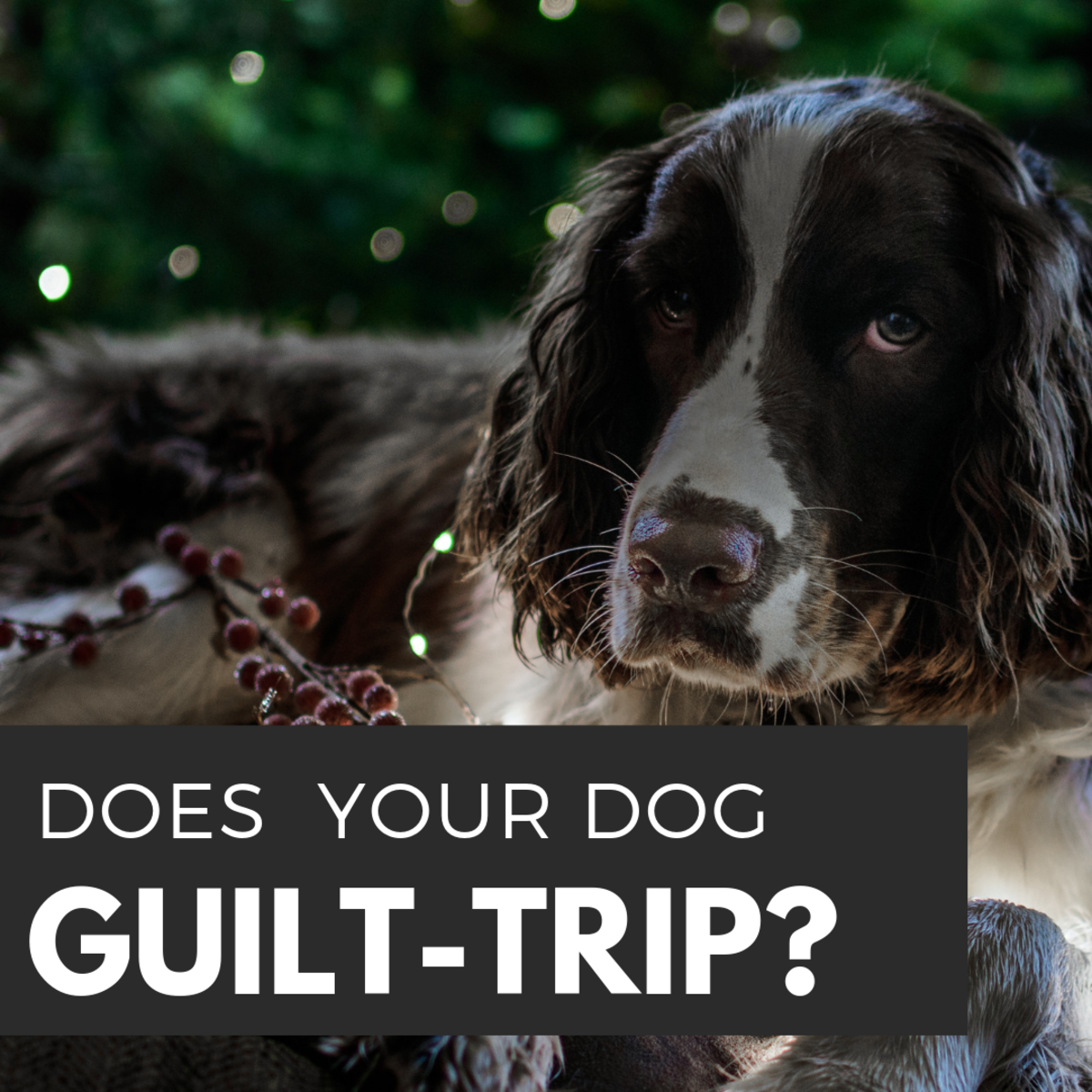 Is your dog sad or is he or she just guilt-tripping you?