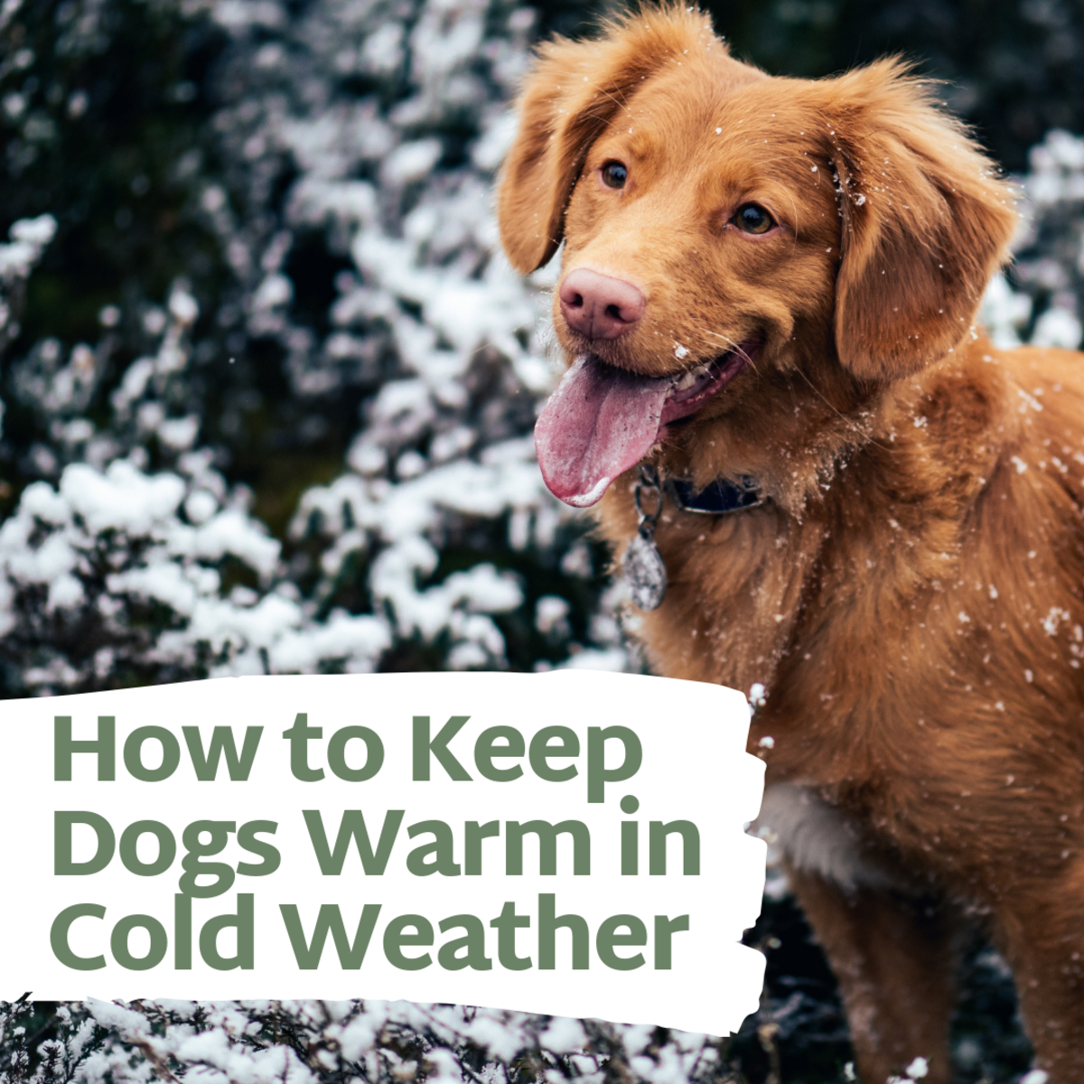 Keep Dogs Warm in the Winter