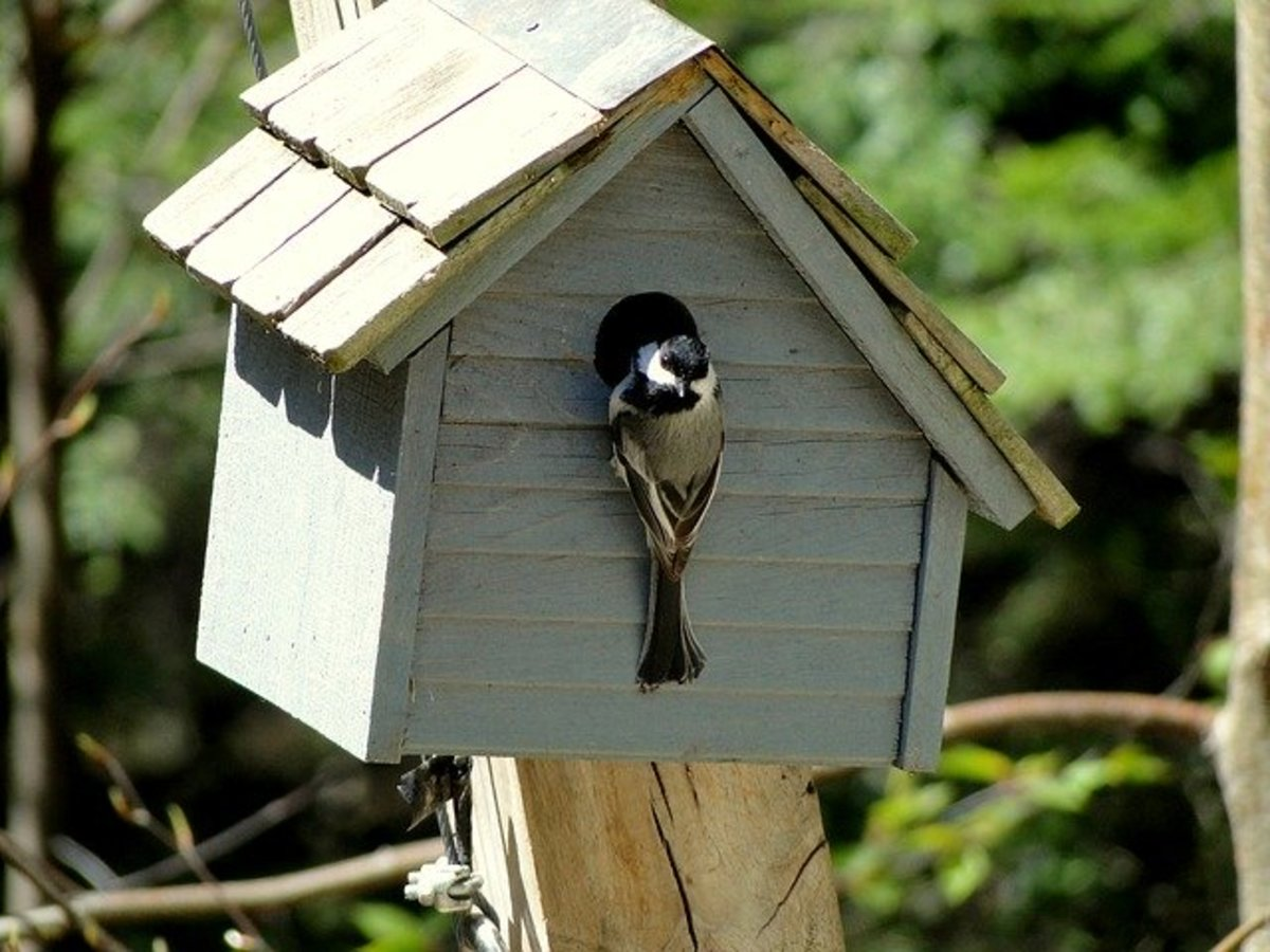 how to get birds to nest in your birdhouse dengarden. Black Bedroom Furniture Sets. Home Design Ideas