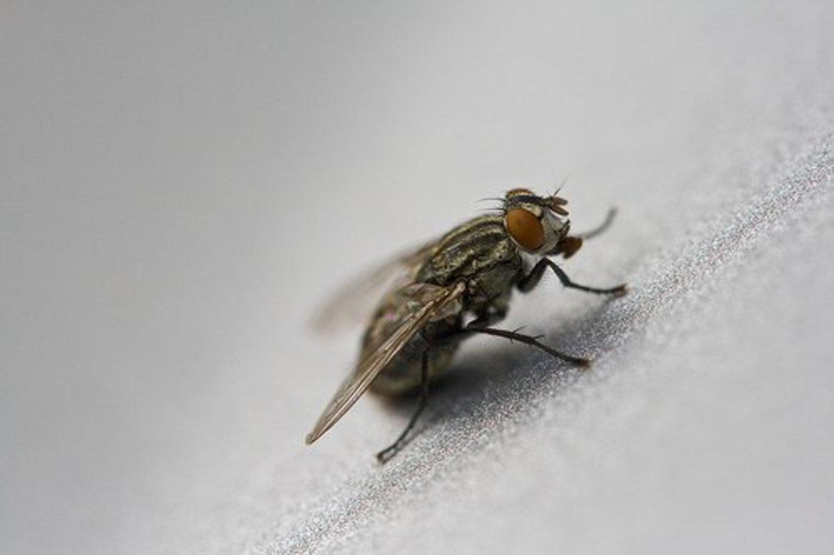 How to Kill Flies