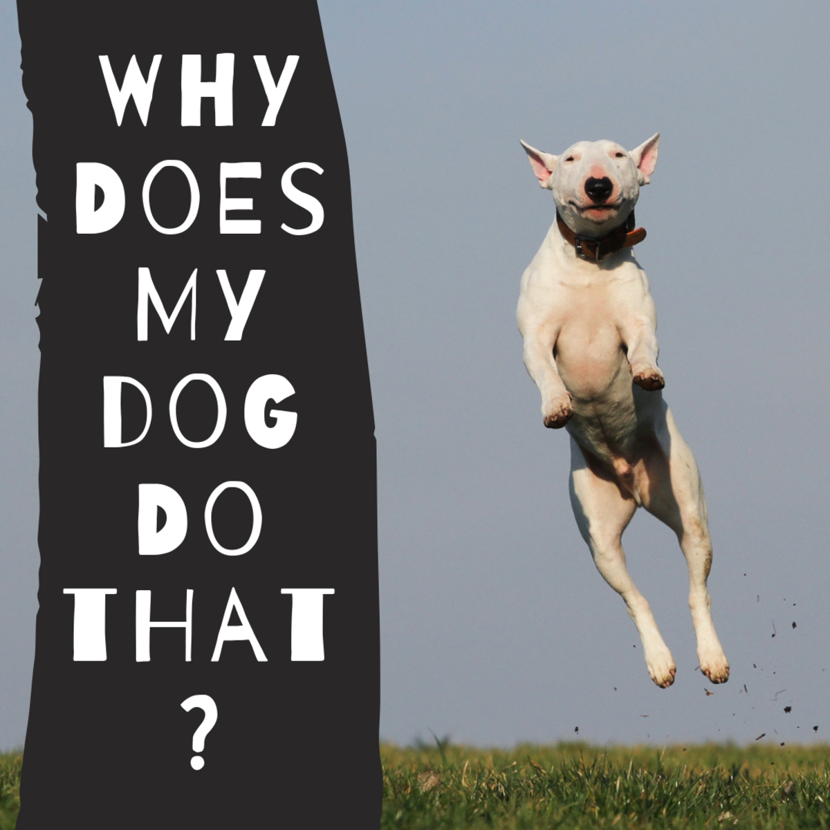Dog Behavior: Why Dogs Behave in Certain Ways