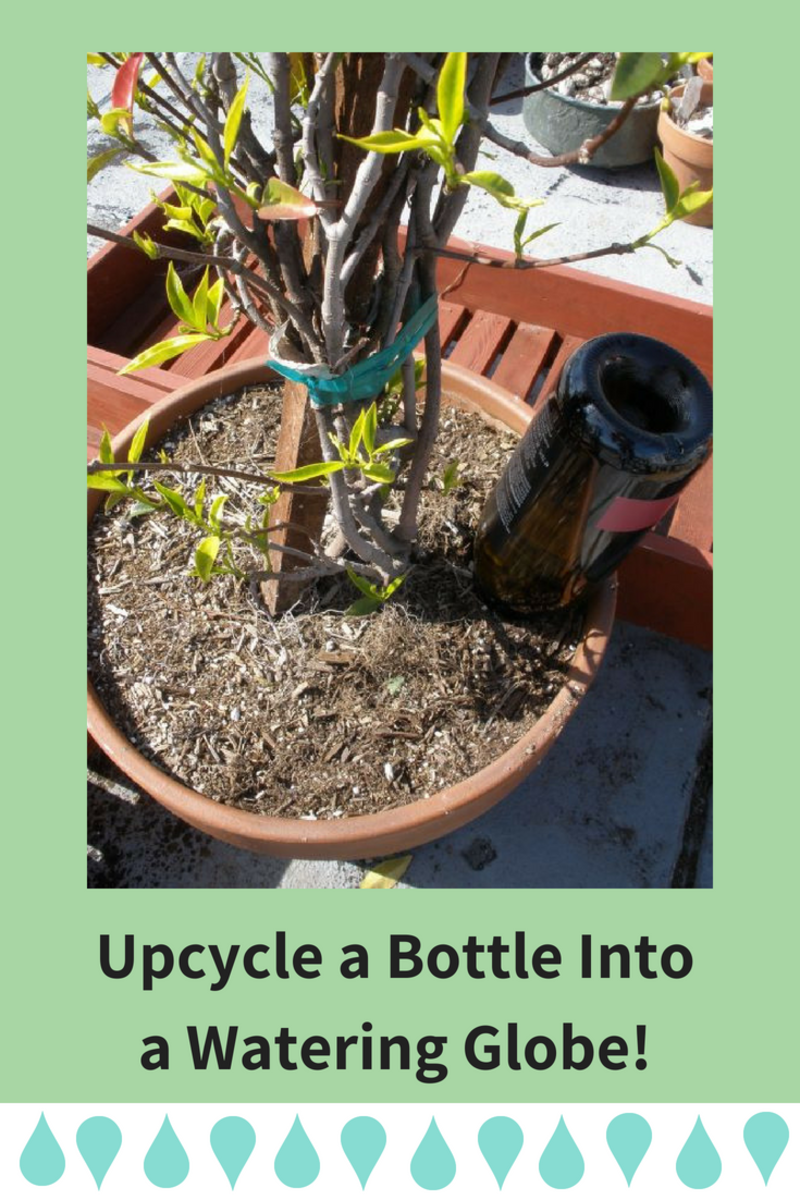 Make Your Own Recycled Plant Watering Globe in Minutes!