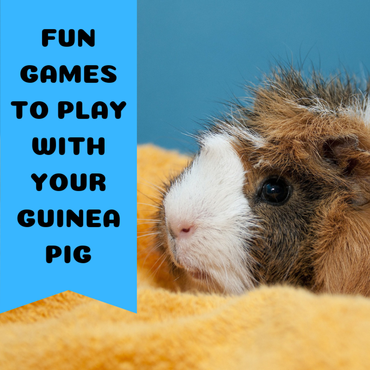 Guinea pigs love to play games in a calm atmosphere.