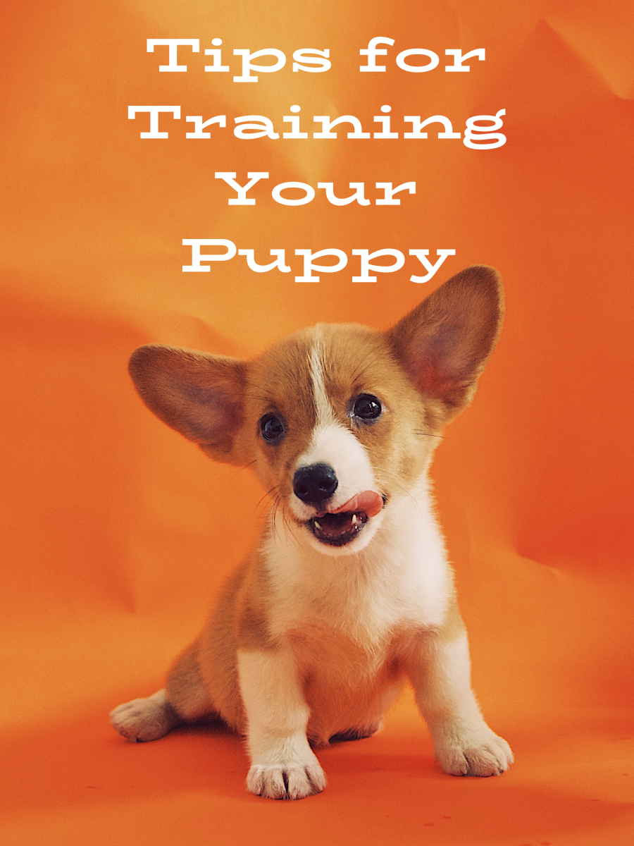 Puppy Training Tips for First-Time Puppy Owners