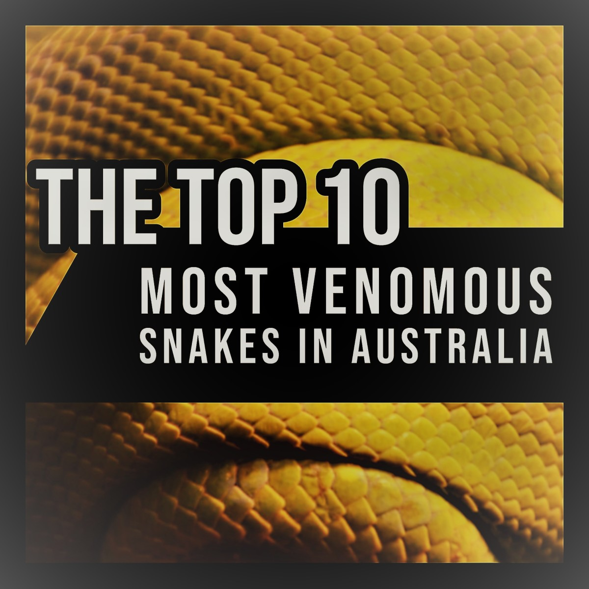 The Top 10 Most Venomous Snakes in Australia