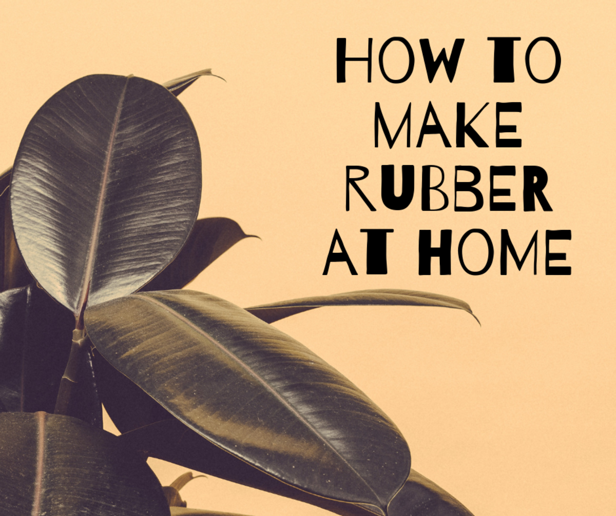 How to make rubber at home from your own rubber plant!
