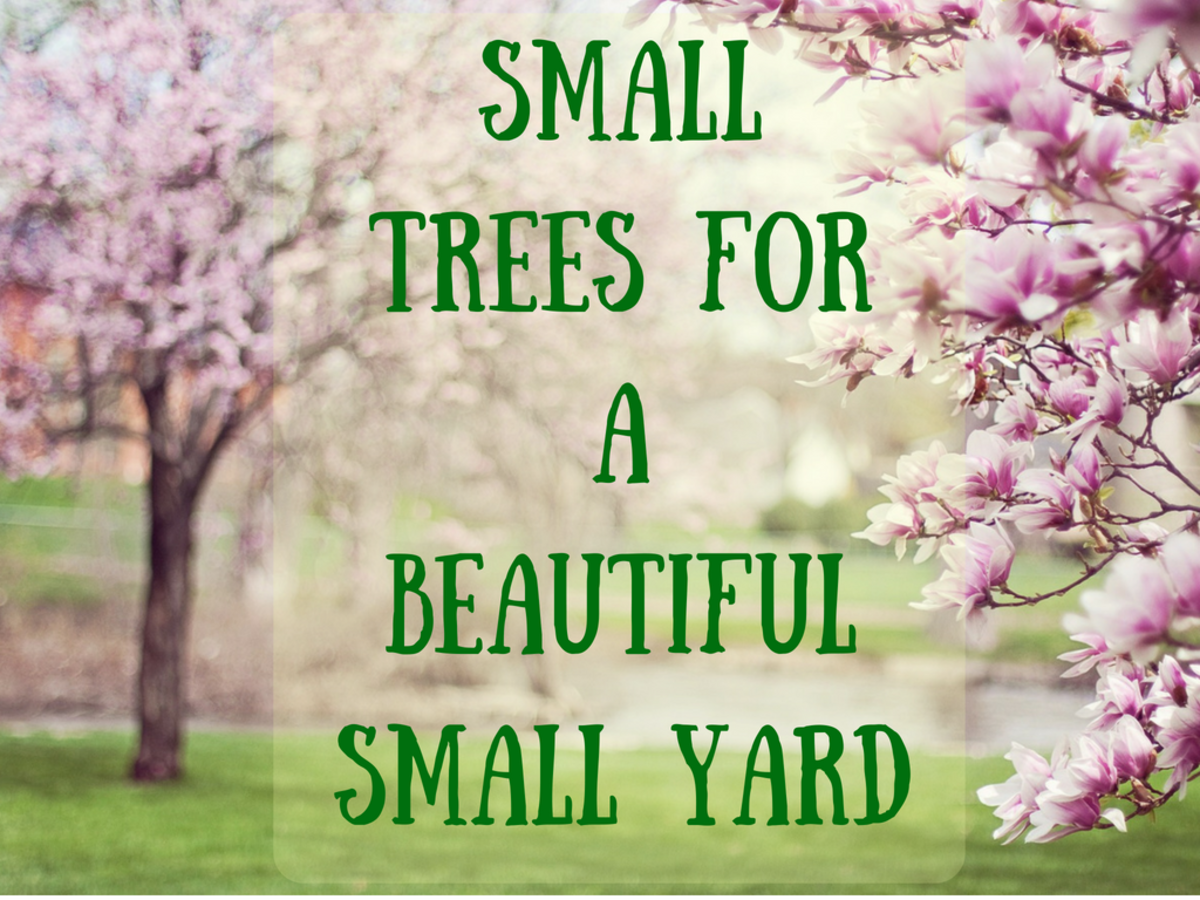 Small flowering or evergreen trees beautify a boring landscape.