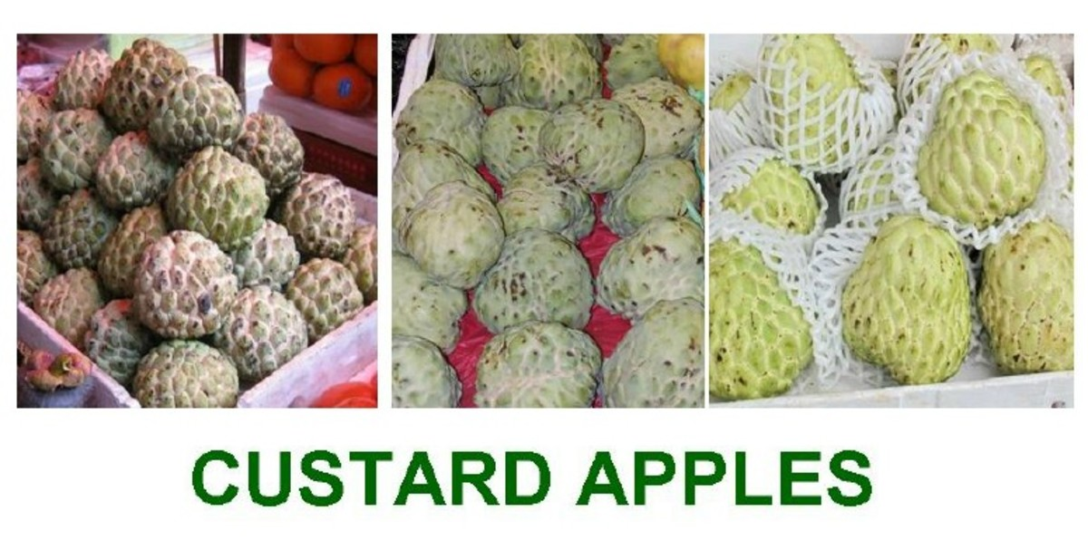 Information About Custard Apples