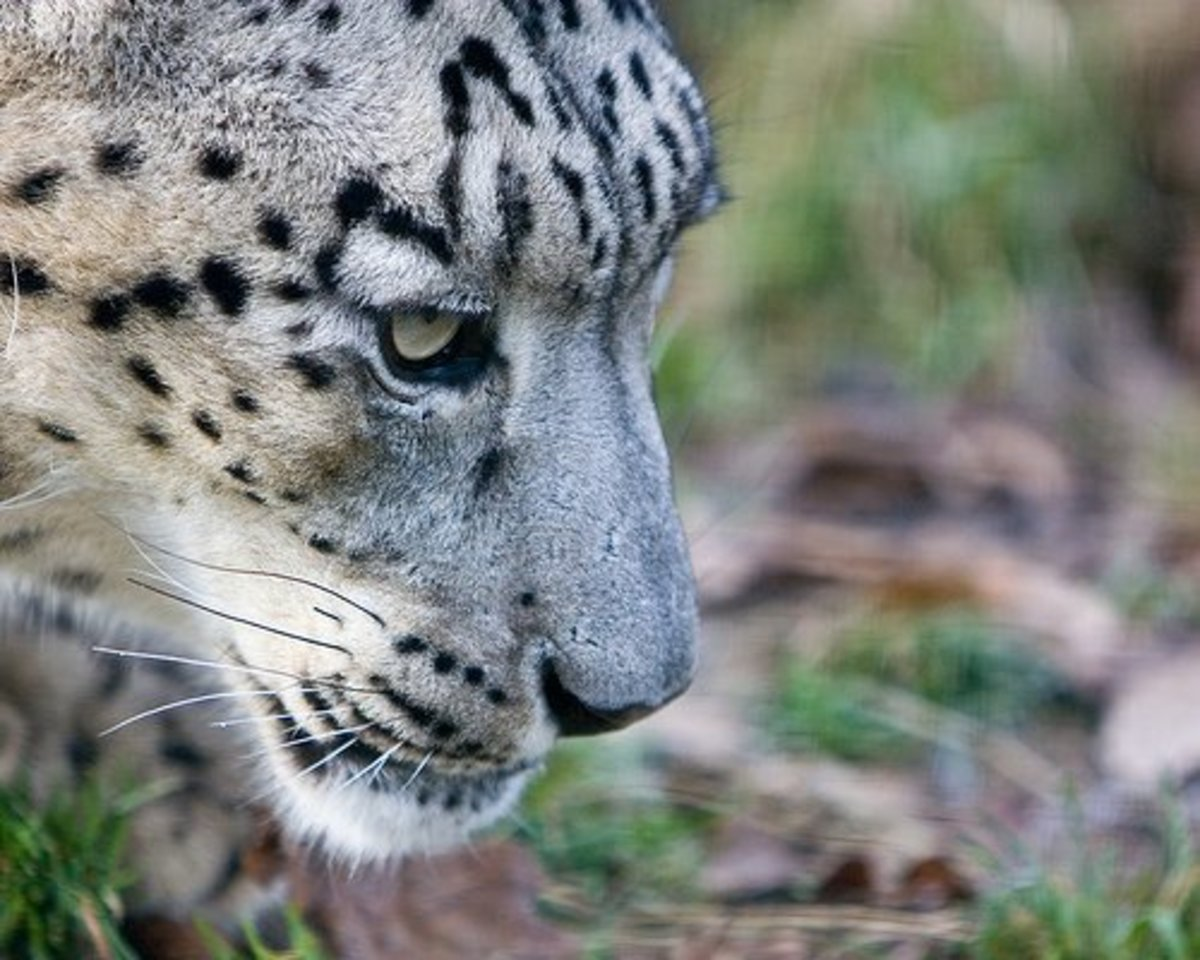 List of Top 10 Endangered Animal Species in Asia | Owlcation