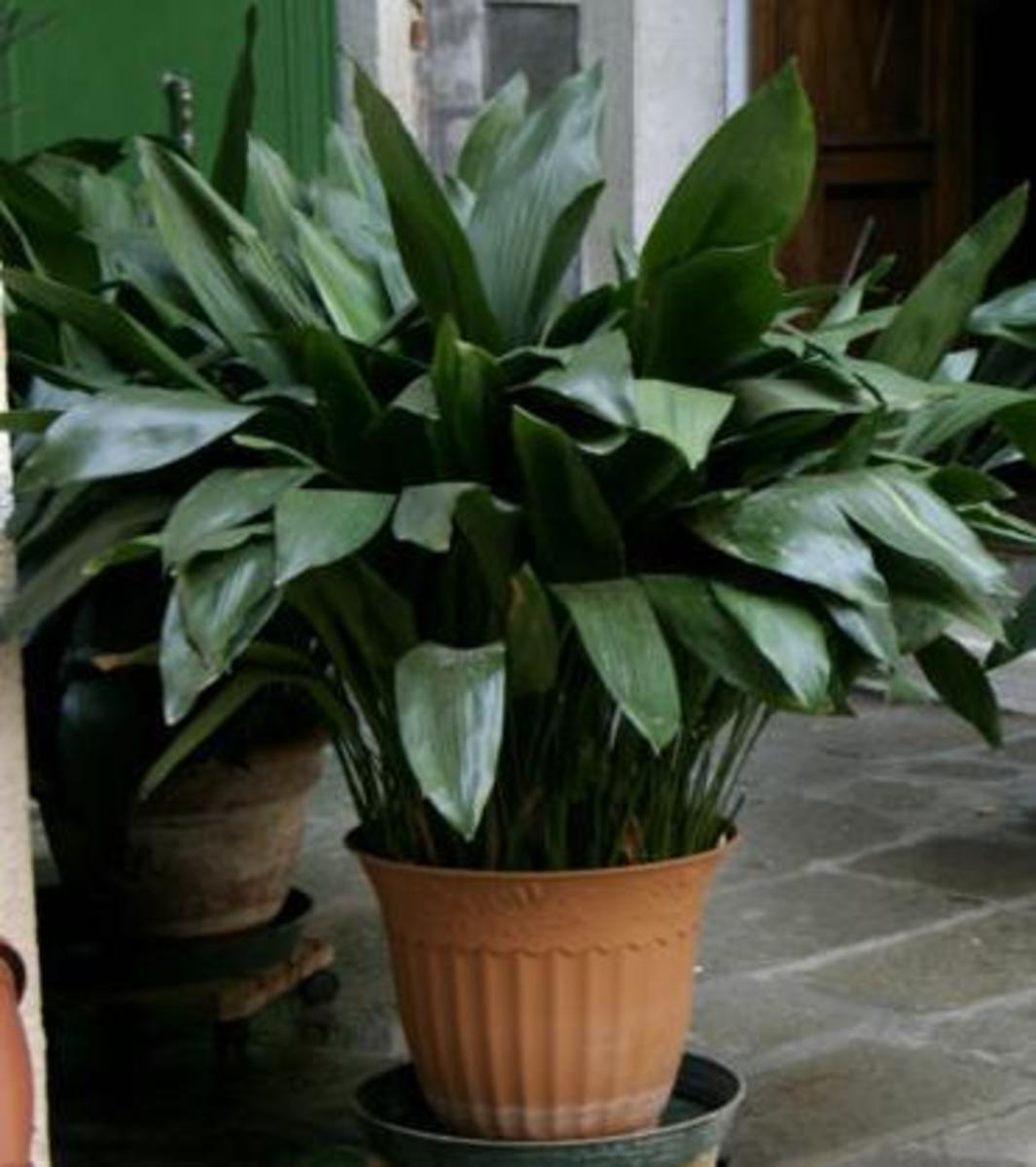 Easiest Indoor Houseplants to Maintain