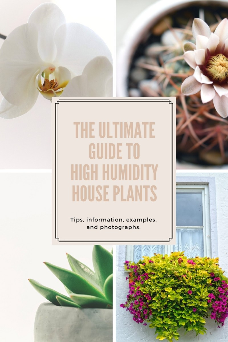 The Ultimate Guide to High Humidity Houseplants