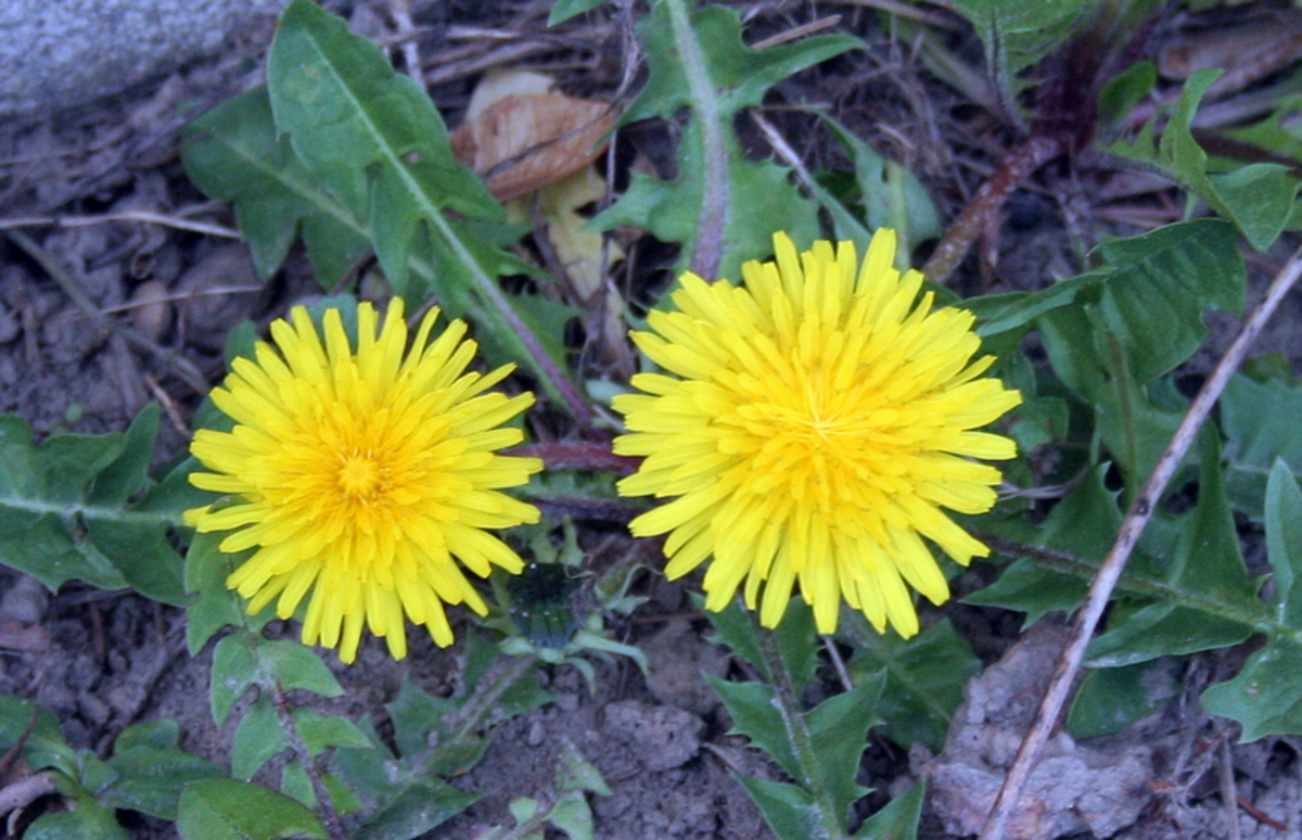 Prevent Weeds From Growing In Your Yard