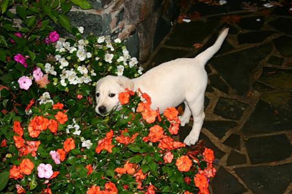 Planting a Dog Friendly Garden