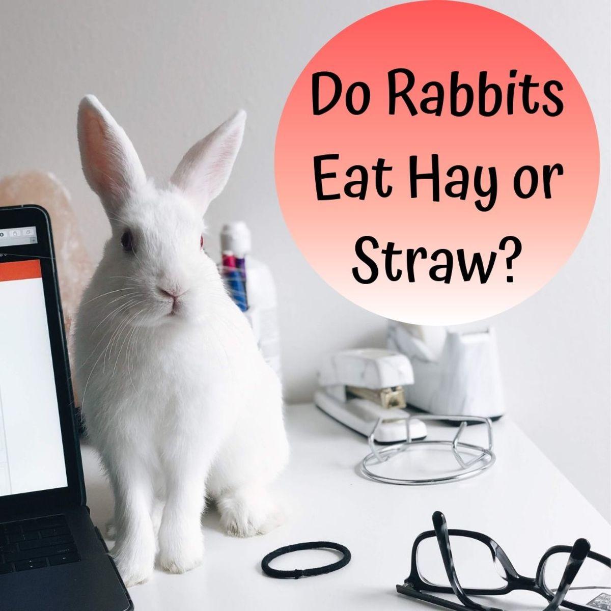 Do Rabbits Need Straw or Hay? Bunny Bedding vs. Feeding