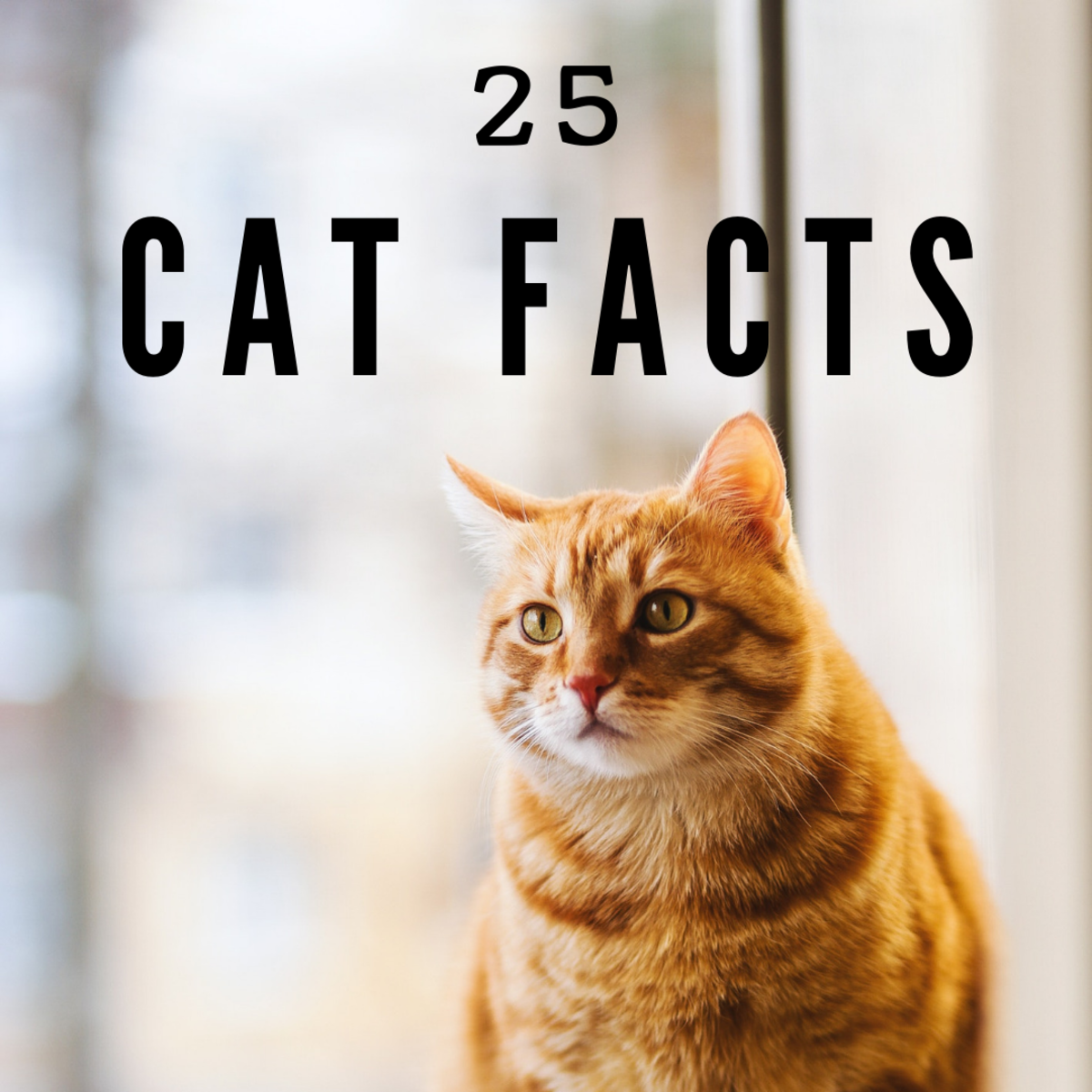 23 Fascinating Facts About Cats