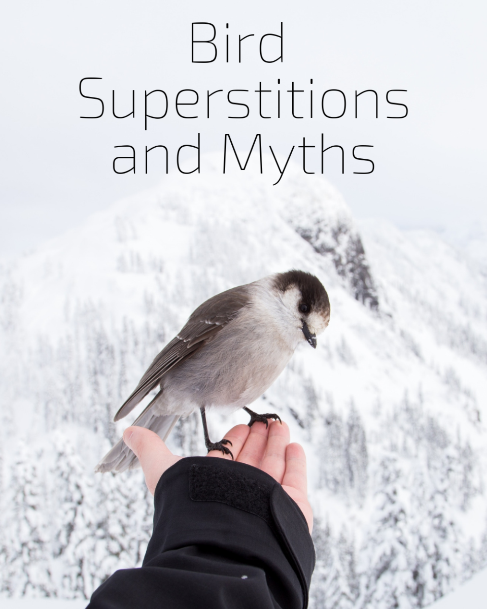 Explore Bird Superstitions and Myths | Exemplore