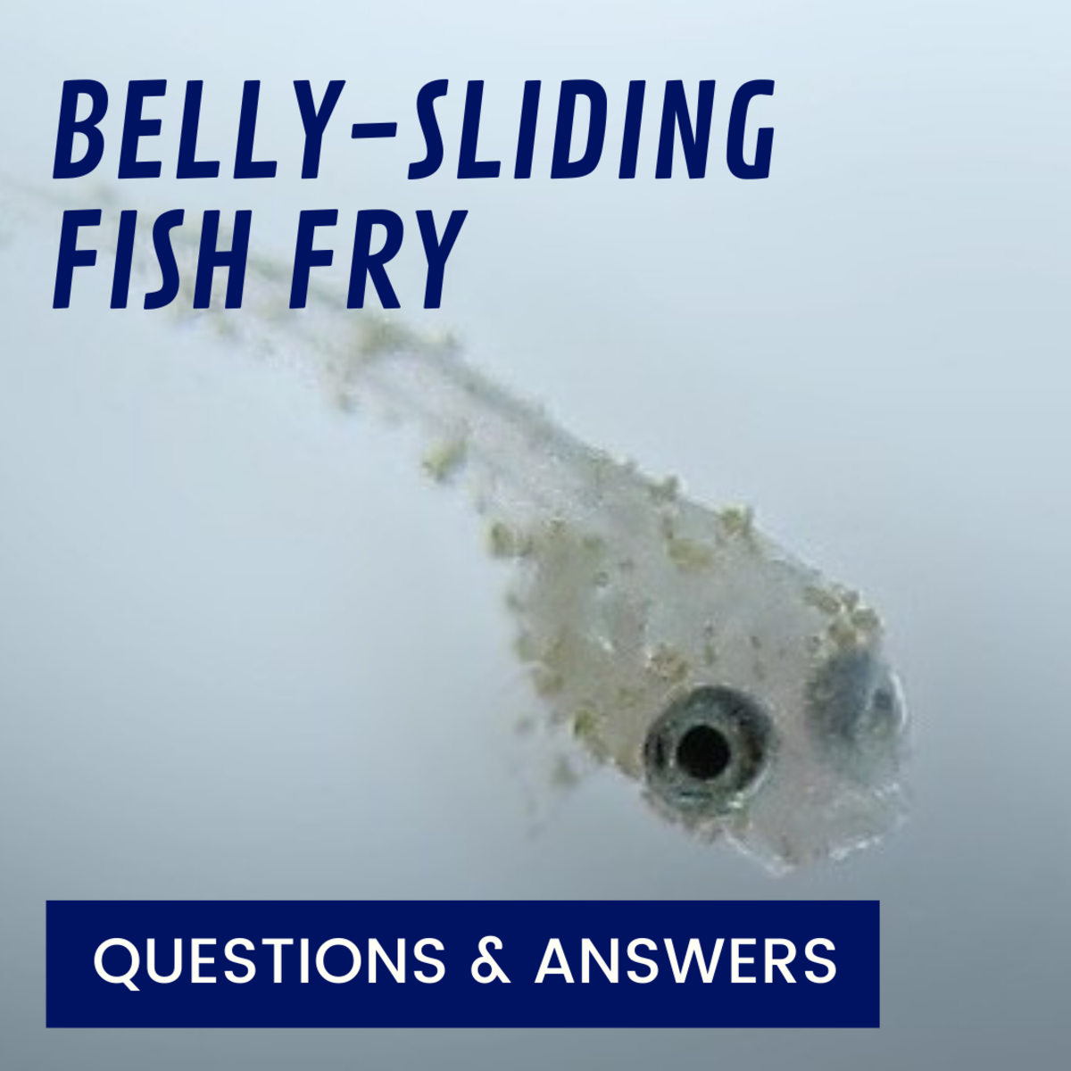 Belly-Sliding Fish Fry: What Does It Mean?
